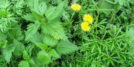 Spring Herbal Tonics tickets
