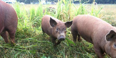Nose-to-tail butchery & cooking: maximizing your pork share