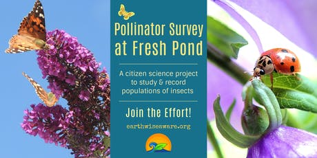 Pollinator (& Insect) Survey at Fresh Pond tickets