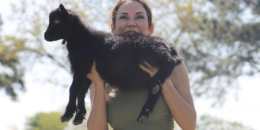 Goat Yoga Houston Nett Bar