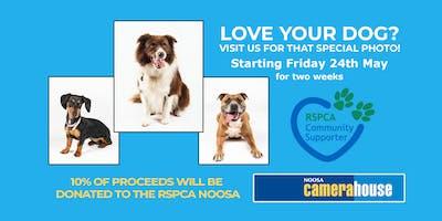 Noosa Camera House Dog Photo Day