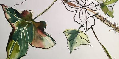 City Art Centre: Plants in Ink