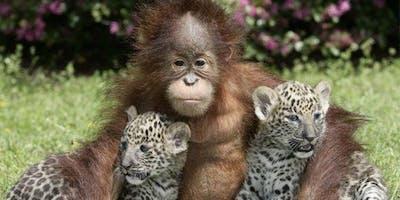 "\""Carer Safari\"" a journey through the jungle."