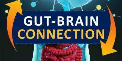 The Guts You Need To Heal Your Brain