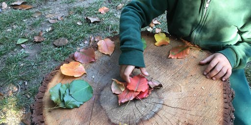 Wonder Based Teaching: Following the Traces of Wonder