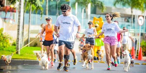 5ª edição da Correndo pra Cachorro Canicross com Alexandre Rossi e Estopinha