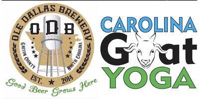 Ole Dallas Brewery Goat Yoga Event