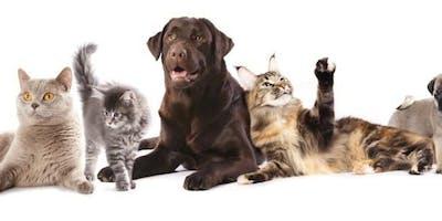 Les huiles essentielles chez les chiens et les chats ONLINE