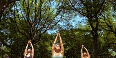 Yoga in the Jungle with Modo Yoga
