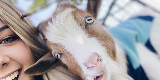 Fall Festival Goat Yoga in Little Elm @ UNION PARK!