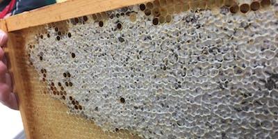 Beekeeping 101A  Sunday May 19 (PM)- Beginner beekeeping