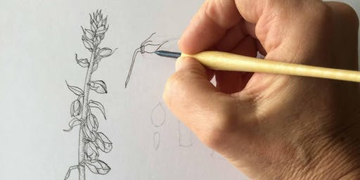Pontefract Castle: Botanical Drawing with Sue Vize - Sunday 4th August 2019 - *Adults 16+