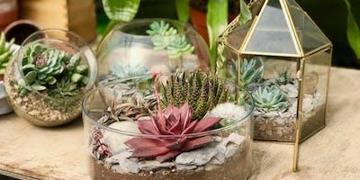 Simple & Stylish Succulent Terrariums