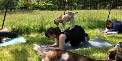 Goat Yoga at GPC