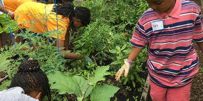 City Parks Foundation's Learning Gardens' Eco Kidz!
