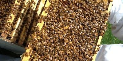 Beyond Basic Beekeeping