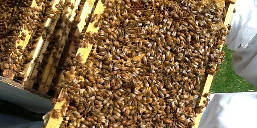 Beyond Basic Beekeeping