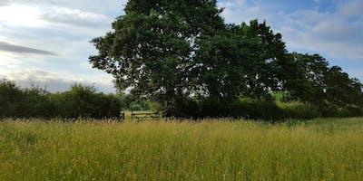 Habitat Condition Survey Training Day - Neutral Grassland