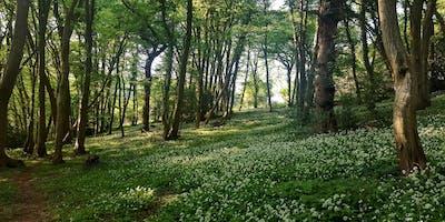 Habitat Condition Survey Training Day - Woodland