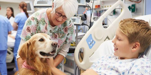 How do companion animals help people? An intro to Animal Assisted Interventions