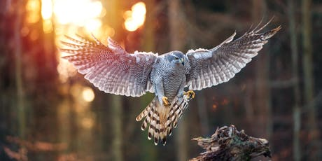 Raptor Aid - Helping save the worlds Birds of Prey tickets
