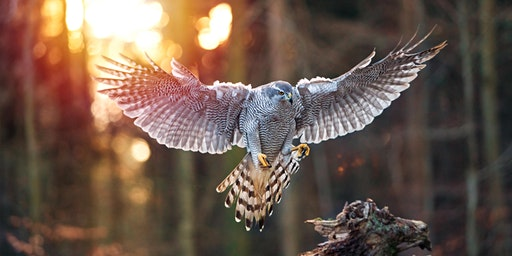 Raptor Aid - Helping save the worlds Birds of Prey