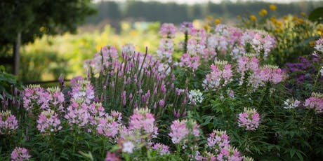 Hendrick Farm Volunteer Day - Flower Care From Spring to Summer tickets