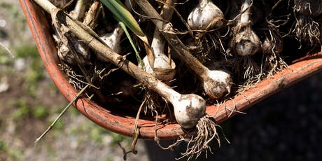 Hendrick Farm Volunteer Day - Garlic Harvest tickets