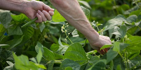 Hendrick Farm Volunteer Day - Bean Care & Harvest tickets