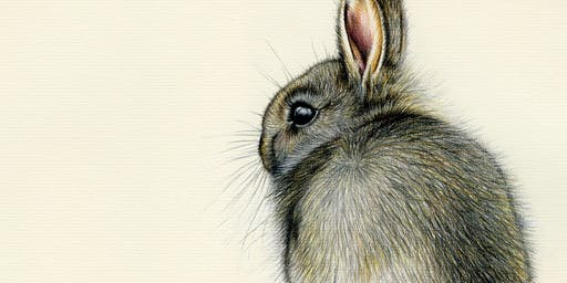 DRAW A WILD BUNNY WITH COLOURED PENCILS