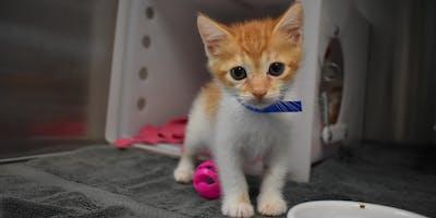 Community Cat Workshop: Foster & TNR for Your Neighborhood Cats & Kittens