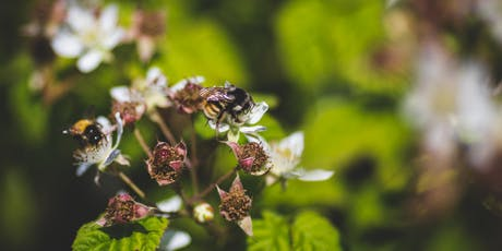 LifeCycles' Wild About Native Pollinators Camp tickets
