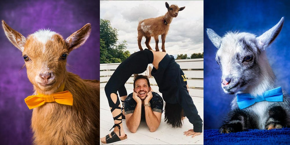 11a60e25452 Baby Goat Yoga with Party Goats LA! Tickets