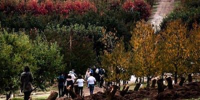Autumn Harvest - Perth Hills