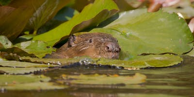 Cornwall Beaver Project Guided Walk - Individuals and Families