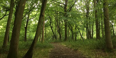 Forest Bathing+. Woodland Therapy