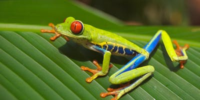 Tropical Costa Rica with Member Choice Vacations