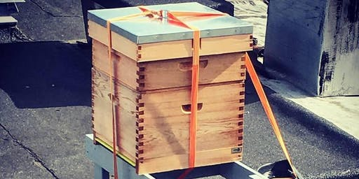 Urban Beekeeping | Bee Stewardship Series + Stoneybatter Fest