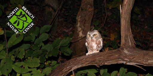 Northern Saw-whet Owl Banding - Youth Overnight 2019