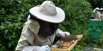 Beekeeping Experience Day at St Mary\