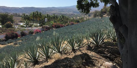 Tequila is a Region, Agave is a Culture tickets