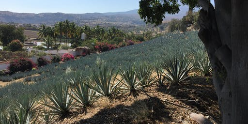 Tequila is a Region, Agave is a Culture