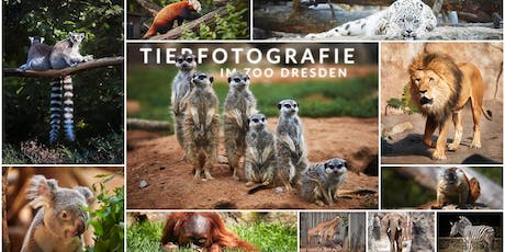Fotografie Workshop | Tierfotografie im Zoo Dresden Tickets