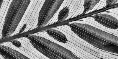 Digital Black and White Photography Workshop