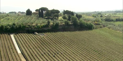 Wine Tasting: A tour of Lazio from Montefiascone to Castelli Romani