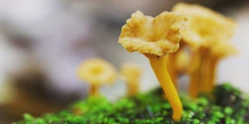 Autumn Mushroom Hunting