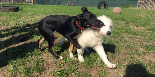 Onze begeleide speelweide: Puppy's