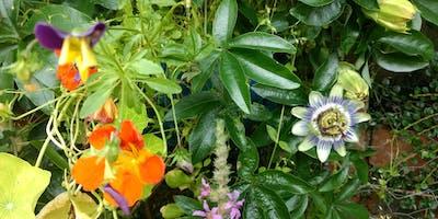 Reading the Garden: AntiUniversity 2019