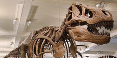 Kids Russian Tour at the Museum of Natural History (Dinosaurs) for 4 to 8 years olds..Тур для детей на русском языке.