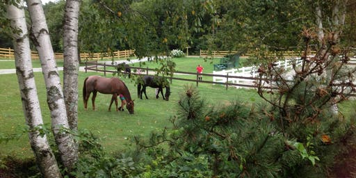 Equine Immersion Day for Military, Veterans and Family members